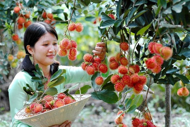 Tour Tham Quan Thưởng Thức Trái Cây Tại Vườn 1N