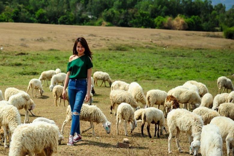 Đồng cừu Châu Pha