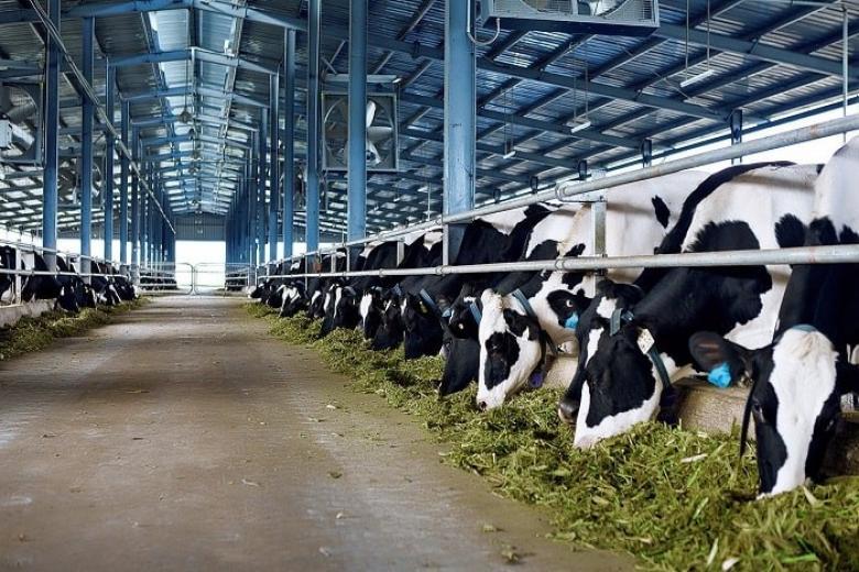 Trang trại bò sữa Long Thành