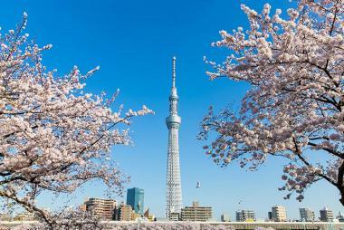 Hà Nội - Nagoya - Osaka - Kyoto - Toyohashi - Kawaguchi - Tokyo 6N5Đ Bay Vietnam Airlines