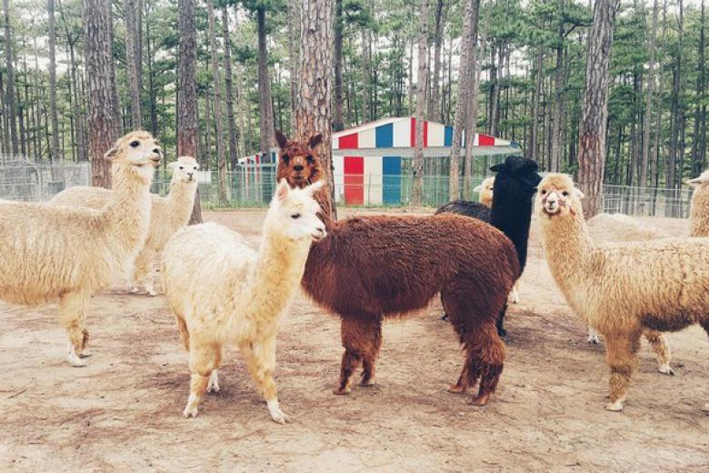 Tour Tham Quan ZooDoo và Nông Trại Đà Lạt 1 Ngày