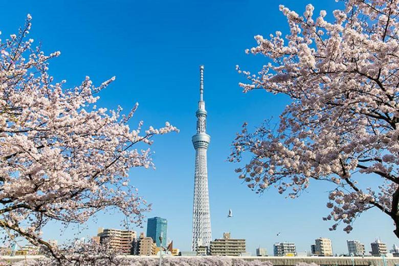 Hà Nội - Nagoya - Osaka - Kyoto - Toyohashi - Kawaguchi - Tokyo - Tổng hợp 6N5D Bay VNA