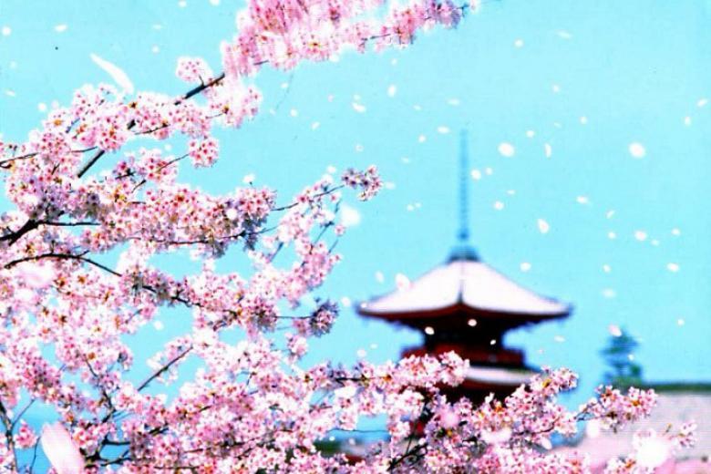Hà Nội - Tokyo - Hakone - Phú Sĩ 4N3Đ Bay VN + Ngắm Hoa Anh Đào
