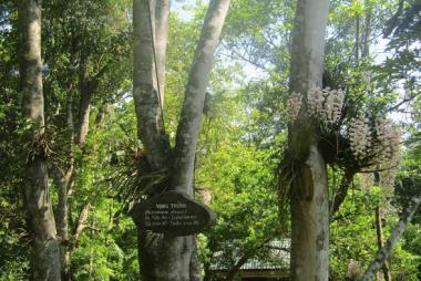 Tour Động Phong Nha – Thác Gió Vườn Thực Vật 1 Ngày