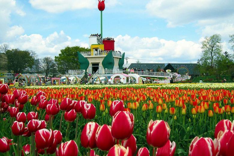 Hà Nội - Nagoya - Osaka - Kyoto - Toyohashi - Núi Phú Sĩ - Kawaguchiko - Tokyo Ngắm hoa Tulip  6N5Đ Bay VNA 4*